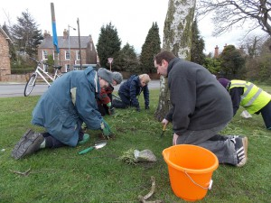 Group planting snowdrops - corner of Main Street